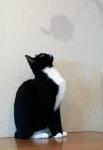 Прекрасные мурлыки в дар - котята и взрослые, разные окрасы и степень пушистости Abee57d3006d2a4f7c24500d85fe675a