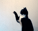 Прекрасные мурлыки в дар - котята и взрослые, разные окрасы и степень пушистости D888a1c968e2677d049df238ae455bef