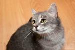 Прекрасные мурлыки в дар - котята и взрослые, разные окрасы и степень пушистости 002492748a7caa167f3e4e57887a4bef