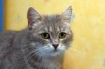 Прекрасные мурлыки в дар - котята и взрослые, разные окрасы и степень пушистости D453da9a7305719e882e964971ed381d