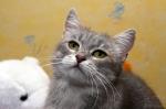 Прекрасные мурлыки в дар - котята и взрослые, разные окрасы и степень пушистости Dfb0c25dc63805a4ddbf3c03c26abdc6