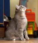 Прекрасные мурлыки в дар - котята и взрослые, разные окрасы и степень пушистости Fbff7e3c8946f3227da5128681fbbde1
