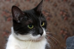 Прекрасные мурлыки в дар - котята и взрослые, разные окрасы и степень пушистости 13e014be24609207aaa7a1ca57b9a3a6