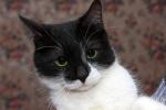Прекрасные мурлыки в дар - котята и взрослые, разные окрасы и степень пушистости 30e6e3f9b54598baee4d659507813ba6