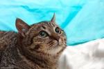 Прекрасные мурлыки в дар - котята и взрослые, разные окрасы и степень пушистости 6db9583110b13d2bb54e5432a408c5ab