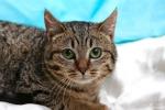 Прекрасные мурлыки в дар - котята и взрослые, разные окрасы и степень пушистости 72634c9e05ff9ad074d00a0d3478004e