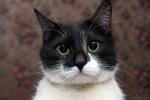 Прекрасные мурлыки в дар - котята и взрослые, разные окрасы и степень пушистости 752e7f569c104aadbb847c8c89dfa3f9