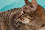 Прекрасные мурлыки в дар - котята и взрослые, разные окрасы и степень пушистости 83375dd48e73ec5fe8a24144b6cae6bf