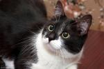 Прекрасные мурлыки в дар - котята и взрослые, разные окрасы и степень пушистости 92820c34ef2cd25e146188d8f9f0aa41