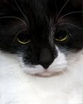 Прекрасные мурлыки в дар - котята и взрослые, разные окрасы и степень пушистости 9e45308e2657b9a9fde0557193662f62