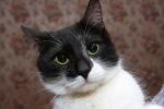 Прекрасные мурлыки в дар - котята и взрослые, разные окрасы и степень пушистости A694c90e949a33990510a2bd2348e5c1