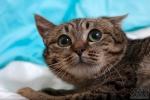 Прекрасные мурлыки в дар - котята и взрослые, разные окрасы и степень пушистости A9439b7600f5b6d4a00c593144dd6b57