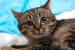 Прекрасные мурлыки в дар - котята и взрослые, разные окрасы и степень пушистости Cf000cb7baca25c358c1aa8982e8c6bb