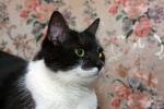 Прекрасные мурлыки в дар - котята и взрослые, разные окрасы и степень пушистости D72531f57ac4b688b73465b1fa2748f1