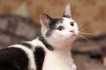 Прекрасные мурлыки в дар - котята и взрослые, разные окрасы и степень пушистости 71e4d9687ed840a334acaefef15702f1