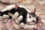 Прекрасные мурлыки в дар - котята и взрослые, разные окрасы и степень пушистости 8f6541f014ceb2b3846e55336f11da40