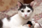 Прекрасные мурлыки в дар - котята и взрослые, разные окрасы и степень пушистости E4a3b8485b59867e9c30cba2d9463333