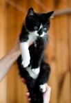 Прекрасные мурлыки в дар - котята и взрослые, разные окрасы и степень пушистости - Страница 2 17860b7d40348a8bfc2dba8d1a238aa3