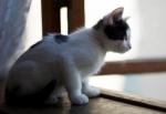 Прекрасные мурлыки в дар - котята и взрослые, разные окрасы и степень пушистости - Страница 2 4f6eb7b978f2c97126a1b2e3ad408eaf