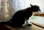 Прекрасные мурлыки в дар - котята и взрослые, разные окрасы и степень пушистости - Страница 2 536e45246847888b7058ccb7f5453af0