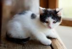 Прекрасные мурлыки в дар - котята и взрослые, разные окрасы и степень пушистости - Страница 2 5baa5d130fa4c5eaf2b76014613c7795