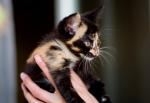 Прекрасные мурлыки в дар - котята и взрослые, разные окрасы и степень пушистости - Страница 2 6dfbf307e6a393bd2595764eb123629d