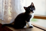 Прекрасные мурлыки в дар - котята и взрослые, разные окрасы и степень пушистости - Страница 2 936eaf1382b5cfe9a1733e9de5ae8f26