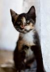 Прекрасные мурлыки в дар - котята и взрослые, разные окрасы и степень пушистости - Страница 2 D753d8569d80044578b33f5356841401