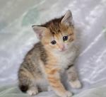 Прекрасные мурлыки в дар - котята и взрослые, разные окрасы и степень пушистости - Страница 2 1e87bd11126409084d9a83752046423f
