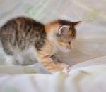 Прекрасные мурлыки в дар - котята и взрослые, разные окрасы и степень пушистости - Страница 2 A4107fa8f3137c1ca2118582a4185bd2