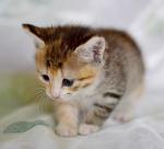 Прекрасные мурлыки в дар - котята и взрослые, разные окрасы и степень пушистости - Страница 2 C0635899bf3f80cd792f768e53596f4a