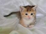 Прекрасные мурлыки в дар - котята и взрослые, разные окрасы и степень пушистости - Страница 2 F030a3d364cd51ac7c364b95542e62c4
