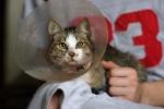 Малыш - кот с ампутированной лапой