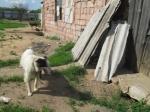 Собаки содержатся в жутких условиях