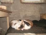 Коты кричат SOS ! Они содержатся в жутких условиях!