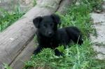 щенок-девочка