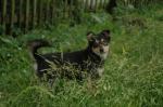 Крошечная собачка на дачах