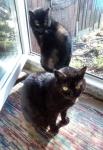 Коты Домика